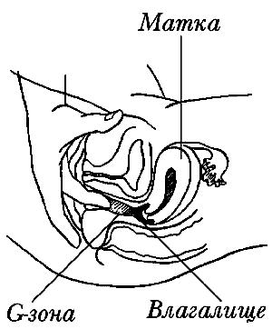 erogennie-zoni-vlagalisha-tochka-g