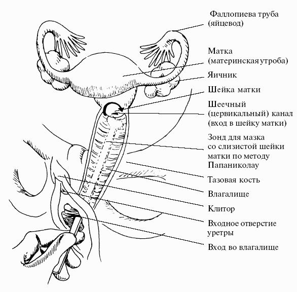 алисия устраивает внутренняя схема вагине материалы