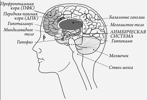 Таблицы мозговой деятельности