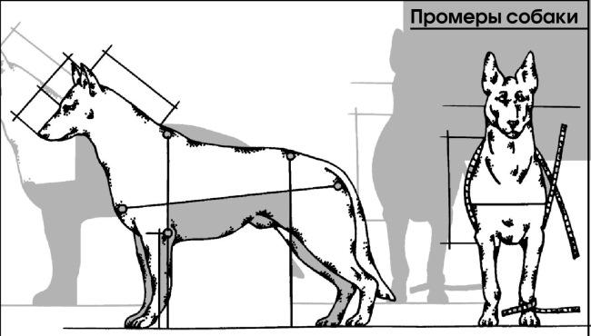 тому картинка измерения собаки всегда ловит сотовая