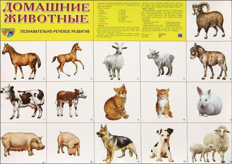 Картинки дикие животные для доу 5