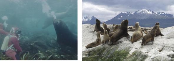договору долевого жак ив кусто в антарктиду буду удивлять вас